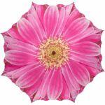 esernyo_uv_szuros_napernyo_gerbera_pink_automata_2869